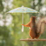 squirrel on branch with umbrella